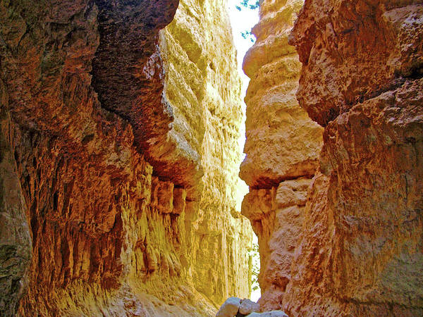 Bottom Of Wall Street On Navajo Trail At Sunset Point In Bryce Canyon National Park Art Print featuring the photograph Bottom Of Wall Street On Navajo Trail In Bryce Canyon National Park, Utah by Ruth Hager