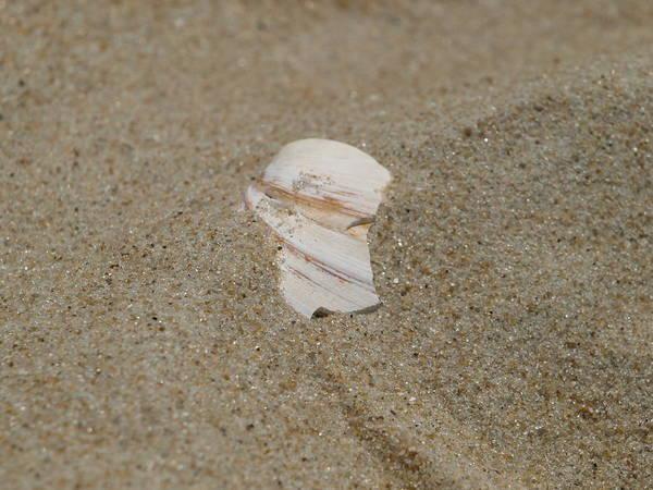 Sand Art Print featuring the photograph Broken Shell by Kim