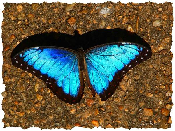 Shadow Art Print featuring the photograph Butterfly Shadow by Judy Waller