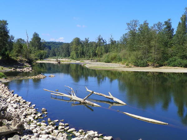 Digital Photography Art Print featuring the photograph Chehalis River Washington by Laurie Kidd
