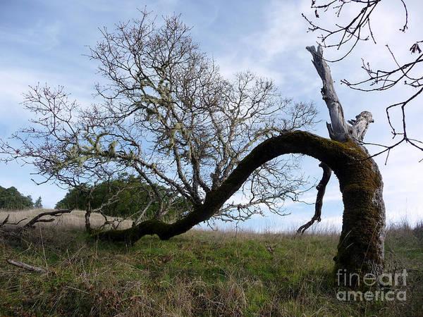 Tree Art Print featuring the photograph Choosing Life by JoAnn SkyWatcher