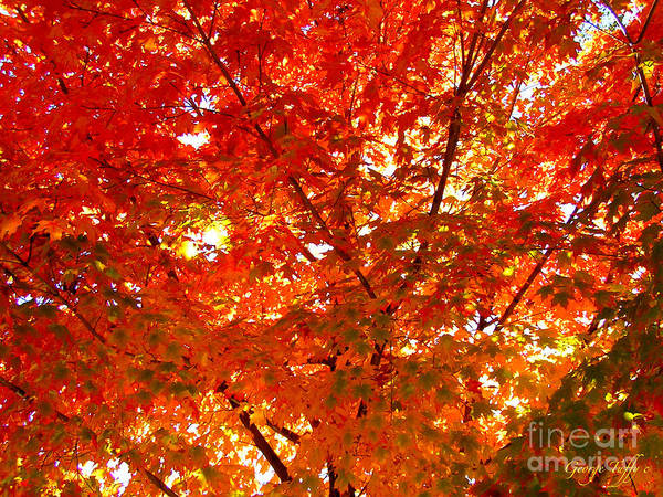 Autumn Fall Red Orange Gold Colorful Trees Leaves Colorado Boulder Art Print featuring the photograph Classic Autumn by George Tuffy