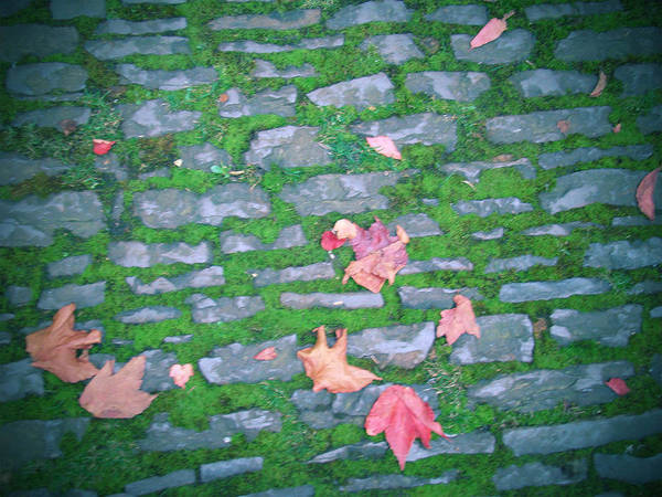 Stones Art Print featuring the photograph Cobblestone Path by Rhianna Wurman