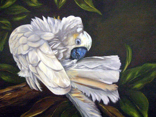 Birds Art Print featuring the painting Cockatoo Preening by Anne Kushnick