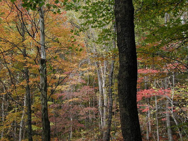 Fall Art Print featuring the photograph Colors by Bj Hodges