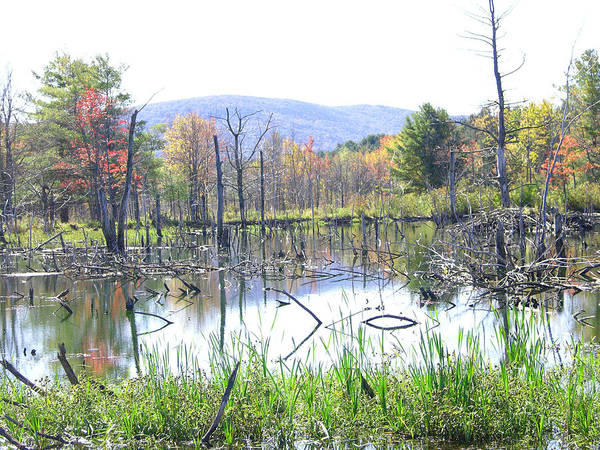 Beaver Pond Art Print featuring the photograph Country Home by Peter Williams