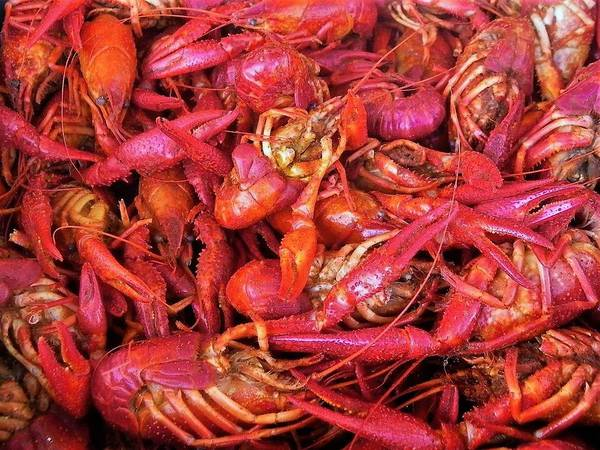 Crayfish Art Print featuring the photograph Crawfish Boil by Judith L Schade