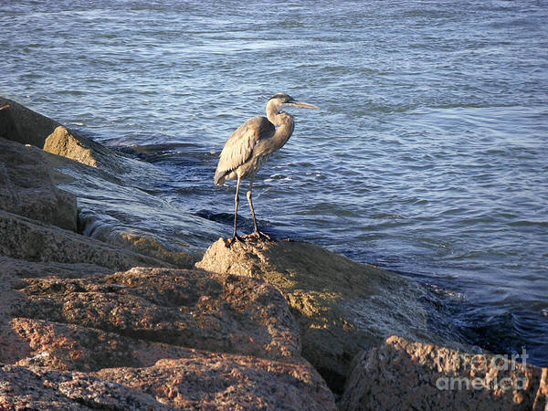 Nature Art Print featuring the photograph Creatures Of The Gulf - Keeping My Head Down by Lucyna A M Green