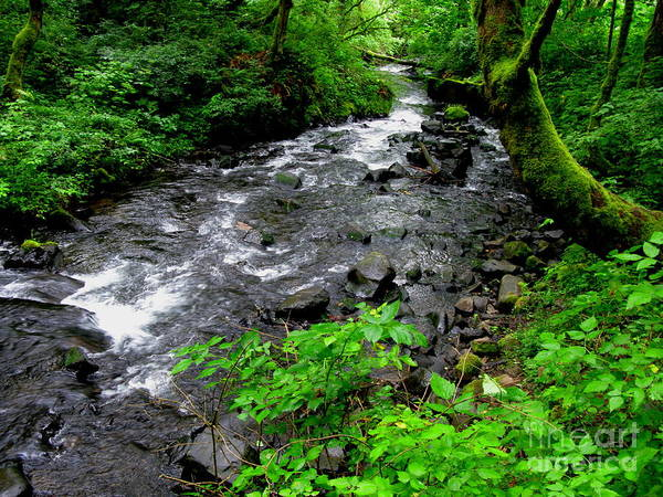 River Art Print featuring the photograph Creek Flow by PJ Cloud