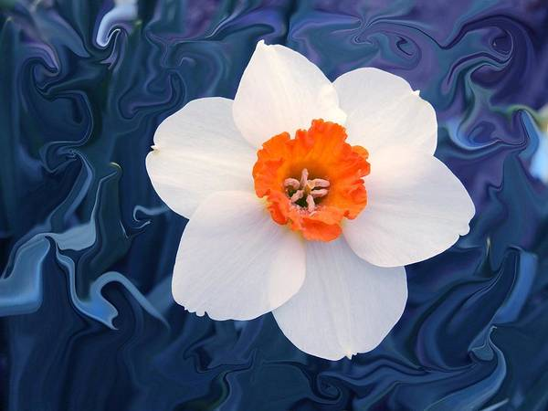 Flower Art Print featuring the photograph Daffodill In Blue by Jim Darnall