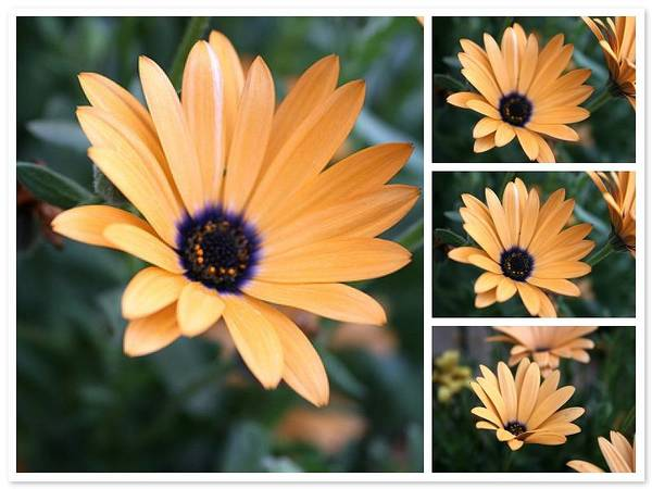 Daisy Art Print featuring the photograph Daisy by Bob Gardner