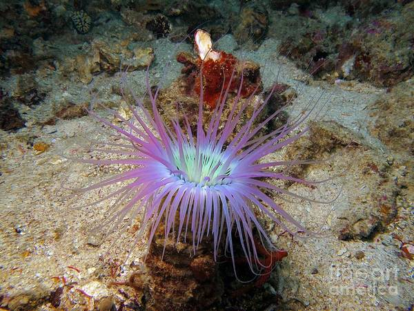 Dangerous Art Print featuring the photograph Dangerous Underwater Flower by Sergey Lukashin