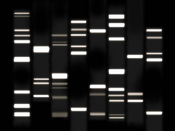 Dna Art Art Print featuring the digital art Dna Art White On Black by Michael Tompsett