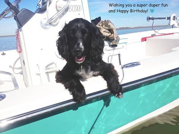 Dog Happy Birthday Card Art Print featuring the photograph Dog Happy Birthday Card by Kristina Deane