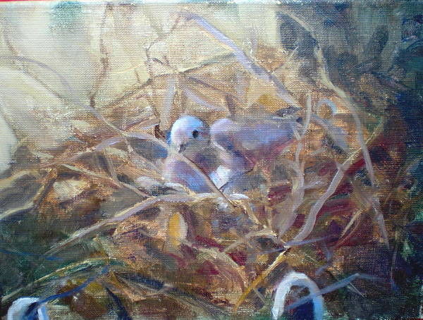 Dove Planter Nest Earth Colors Art Print featuring the painting Dove Nesting by Bryan Alexander