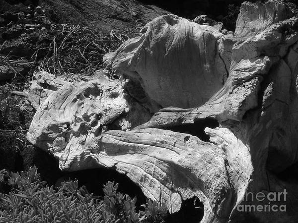 Drift Wood Art Print featuring the photograph Drift Wood by Chad Natti