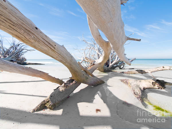 Driftwood Art Print featuring the photograph Driftwood C141414 by Rolf Bertram