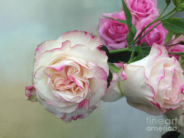 Roses Art Print featuring the photograph Dutch Frilled Roses by Elaine MacKenzie