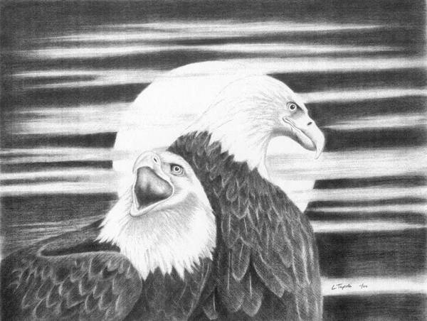 Bird Art Print featuring the drawing Eagles by Lawrence Tripoli