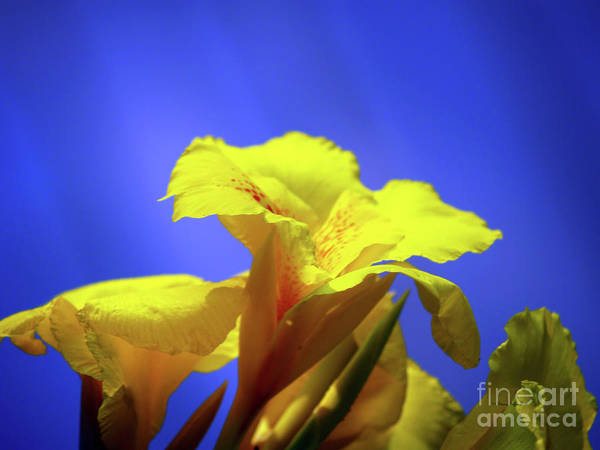 Fine Art Photography Art Print featuring the photograph Emerging Into The Light II by Patricia Griffin Brett