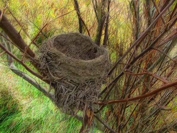 Cedric Hampton Art Print featuring the photograph Empty Nest In Autumn by Cedric Hampton