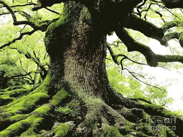 Tree Art Print featuring the photograph Endurance In Japan - Digital Art by Carol Groenen