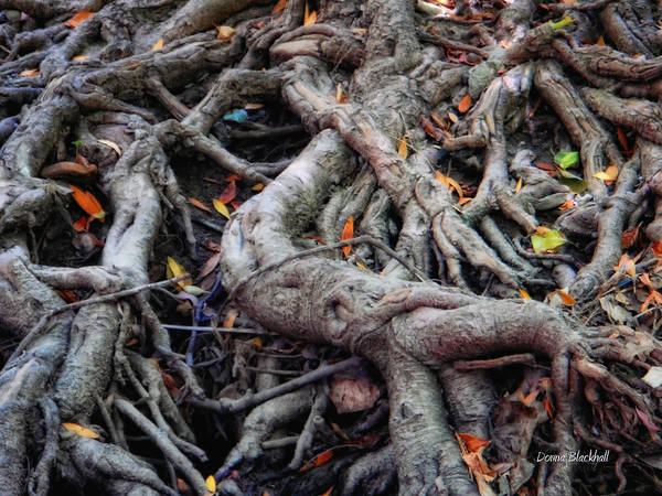 Roots Print featuring the photograph Entanglement by Donna Blackhall