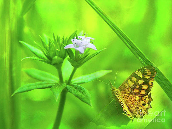 Butterfly Art Print featuring the photograph Entre Flors by Amparo Gallego Mateo