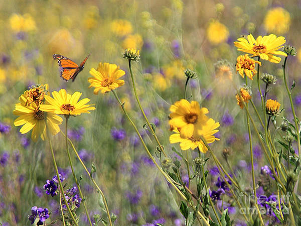 Flowers Art Print featuring the photograph f5 by Tom Griffithe