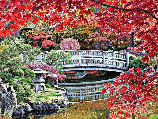 Autumn Bridge Art Print featuring the photograph Fall Bridge In Manito Park by Carol Groenen