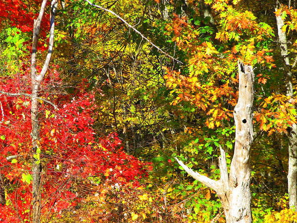 North Carolina Art Print featuring the photograph Fall Colors by April Camenisch