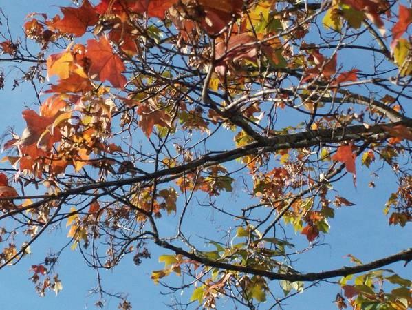 Autumn Landscape Art Print featuring the photograph Fall by Doris Giardini