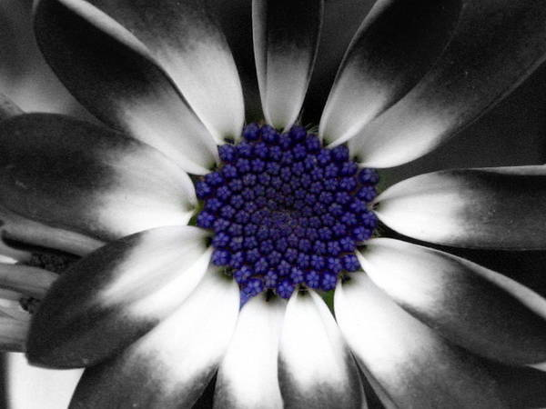 Floral Art Print featuring the photograph Feeling Blue by Marla McFall
