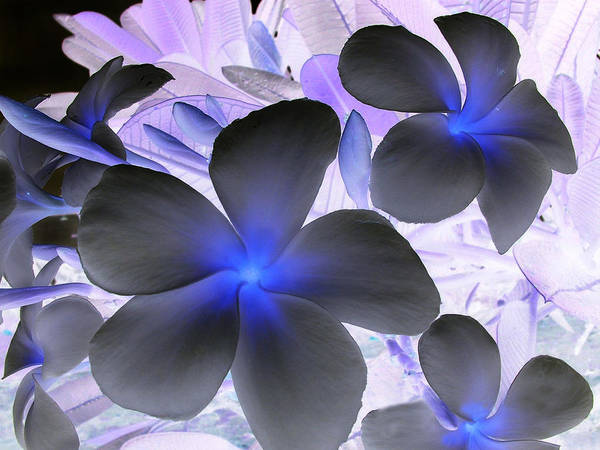 Blue Art Print featuring the photograph Florescent Flowers by Farah Faizal