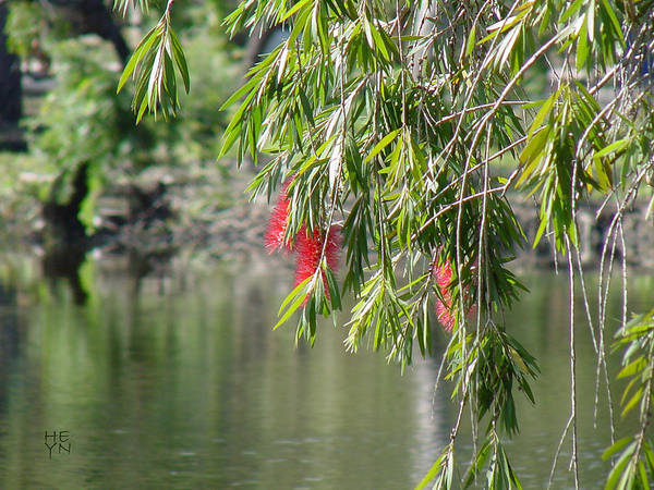 Green Art Print featuring the photograph Florida Reflections by Shirley Heyn