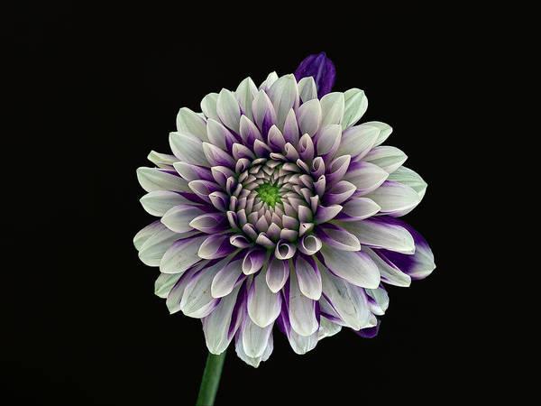 Flower Art Print featuring the photograph Flower Rhythm 1 by Robert Ullmann