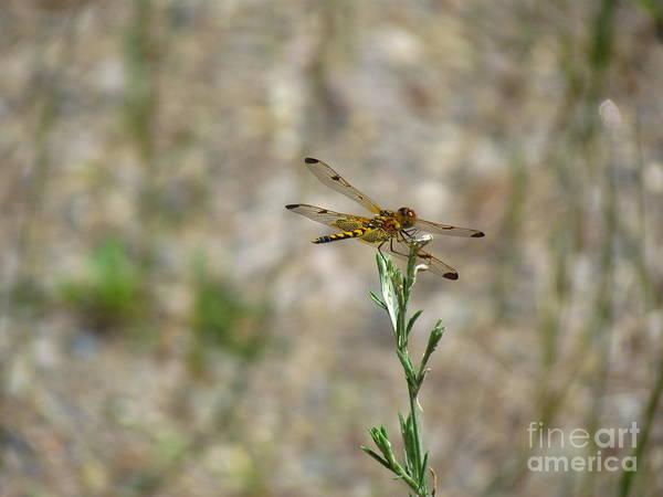 Ontario Art Print featuring the photograph fly by Donica Abbinett