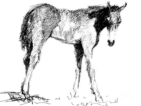 Horse Art Print featuring the drawing Foal In Black And White by Paul Miller