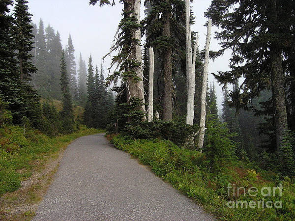 Nature Art Print featuring the photograph Foggy Forest by Silvie Kendall