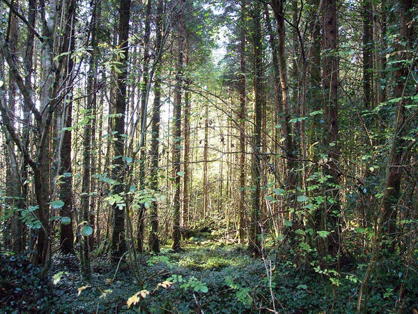 Forest Art Print featuring the photograph Forest Sunshine by John Quinn