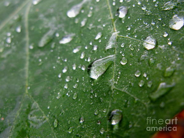 Leaf Art Print featuring the photograph Fresh by PJ Cloud