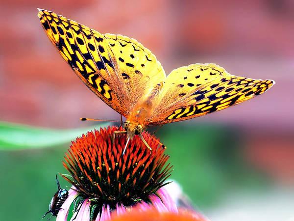 Butterfly Art Print featuring the photograph Friends by Julie Geiss