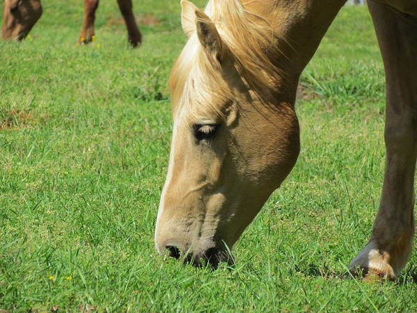 Horse Art Print featuring the photograph Full Of Beauty by Ginger Adams
