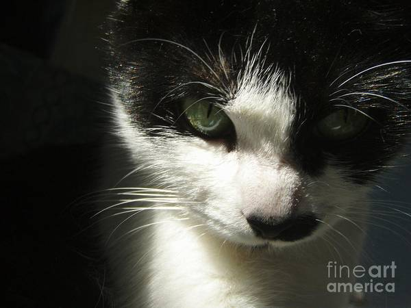 Cat Eyes Art Print featuring the photograph Go Ahead Make My Day by Kristine Nora