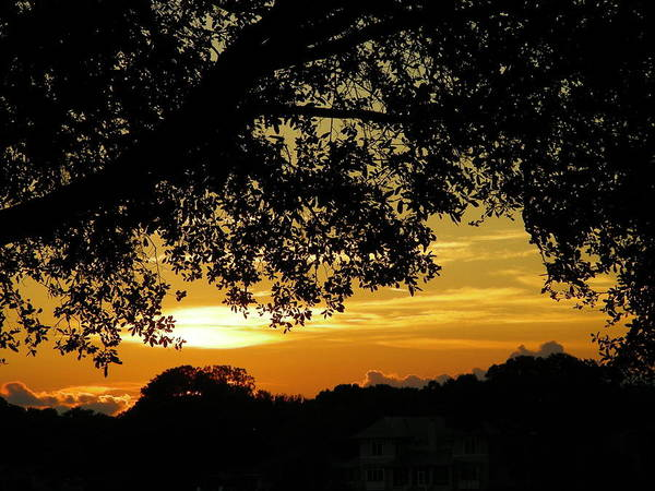 Sunset Art Print featuring the photograph Golden Home by Peter McIntosh
