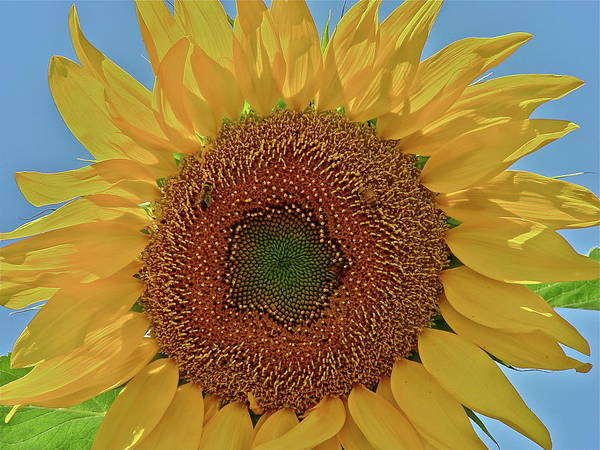 Flower Art Print featuring the photograph Good Morning by Diana Hatcher