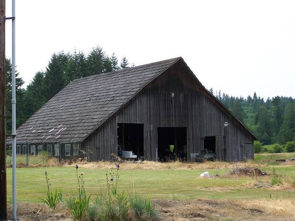 Barn Art Print featuring the photograph Gray Barn   Washington State by Laurie Kidd