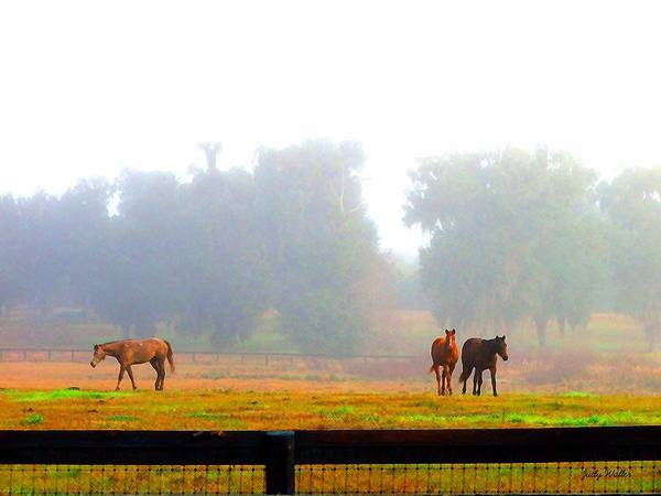 Horses Art Print featuring the photograph Grazing by Judy Waller