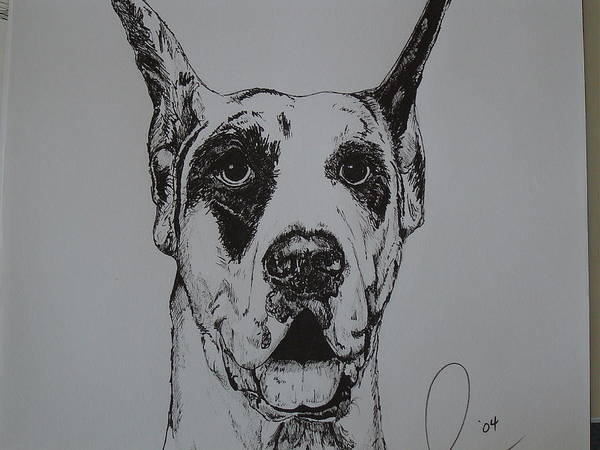 Dogs Art Print featuring the drawing Great Dane by Raymond Nash