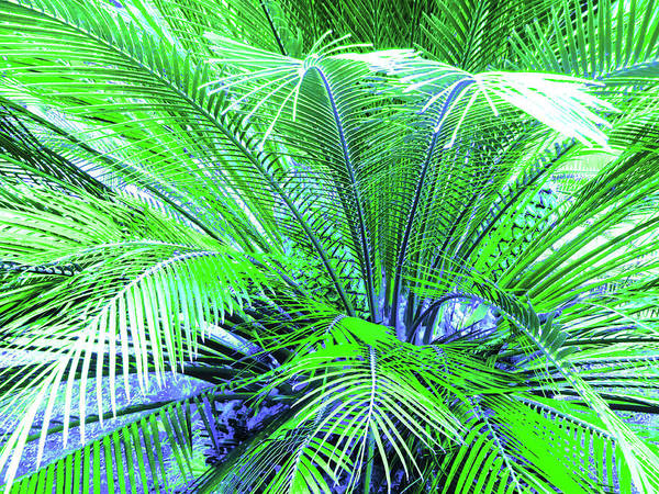 Palm Art Print featuring the photograph Green Palm by Laura Greco